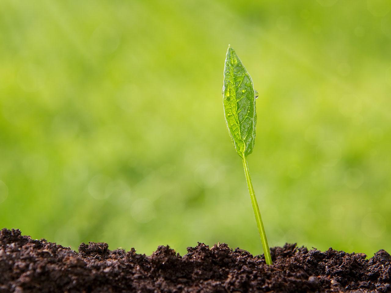Dbałość o środowisko naturalne jest dla nas niezwykle ważna.